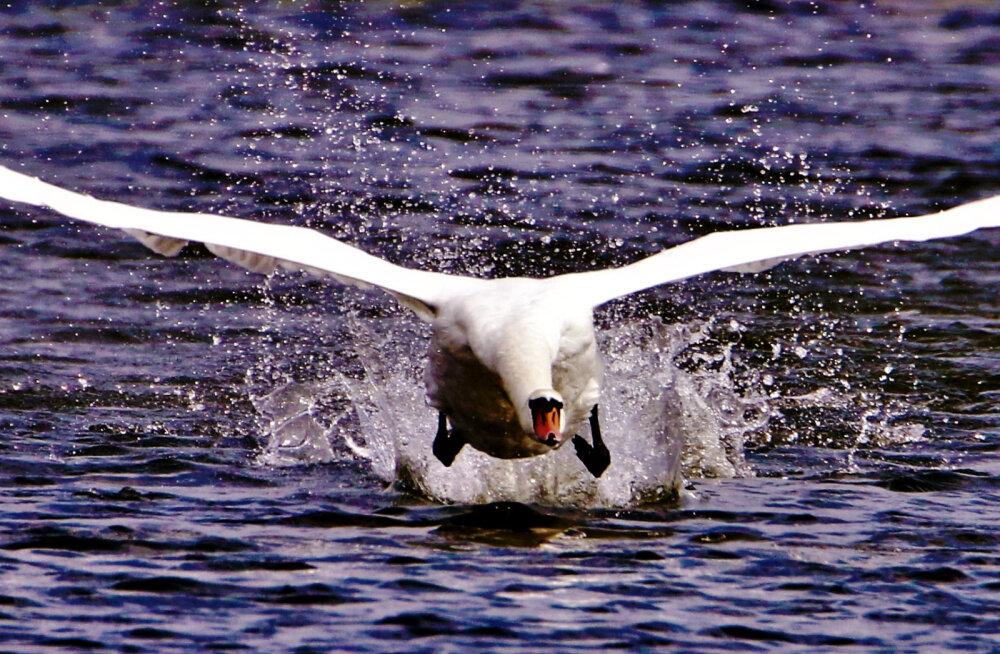 Loodusega silmitsi   Harrastusfotograaf Mati Vaus mere ääres