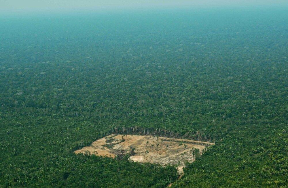 WWF: maailma metsikute loomade arvukus on 44 aastaga kahanenud 60 protsenti