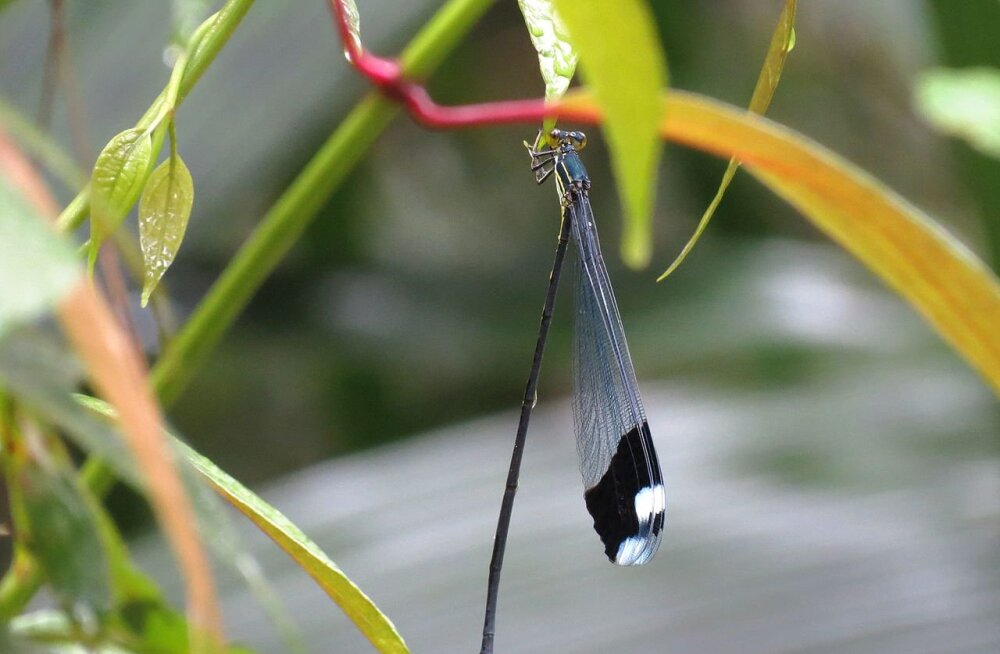 Miks putukad nii väikesed on? Karboniajastul olid palju suuremad!