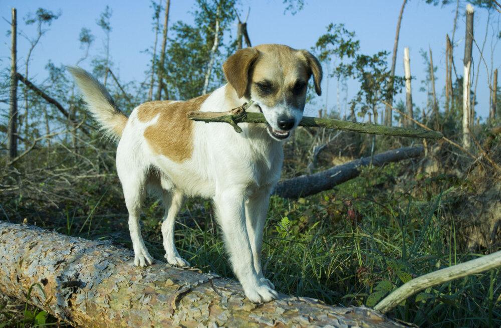 Kaheksa kevadist ohutusnõuannet koeraomanikele