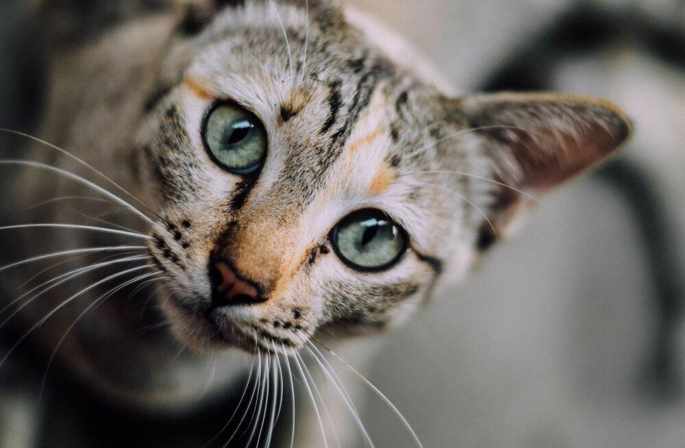 Miks kass mulle otsa vaadates aegluubis oma silmi pilgutab?