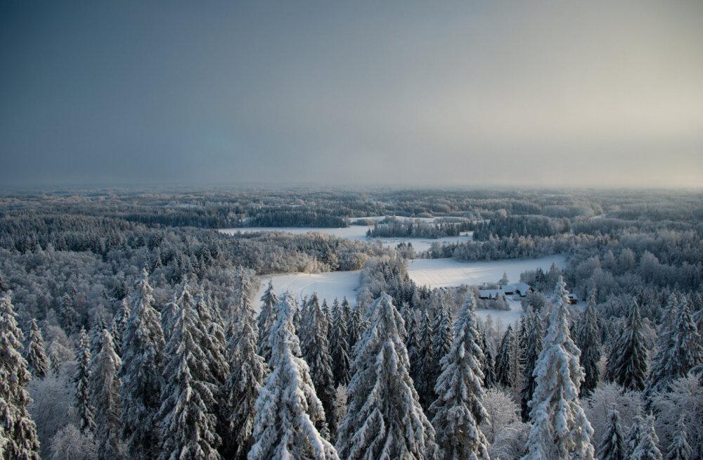 Отдых в Эстонии: зимние радости на природе