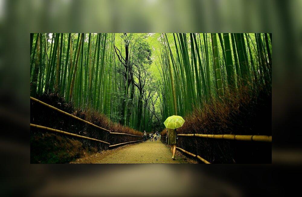 Синдринеку — модные тенденции лесных купаний в Японии