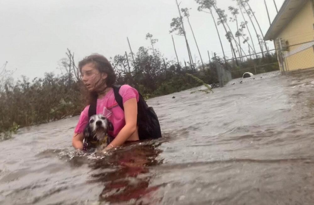 """Жительница Багамских островов спасла 97 собак от урагана """"Дориан"""". Животных успокаивали с помощью музыки и мультфильмов"""