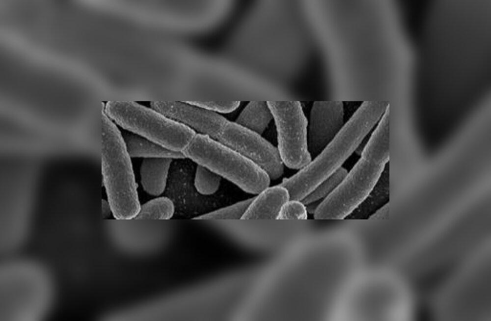 Soolekepikesest saab energiarikast biokütust