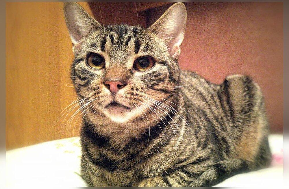 FOTOD | Hoiatav õppetund: alla neelatud lemmikmänguasi viis kassi operatsioonile