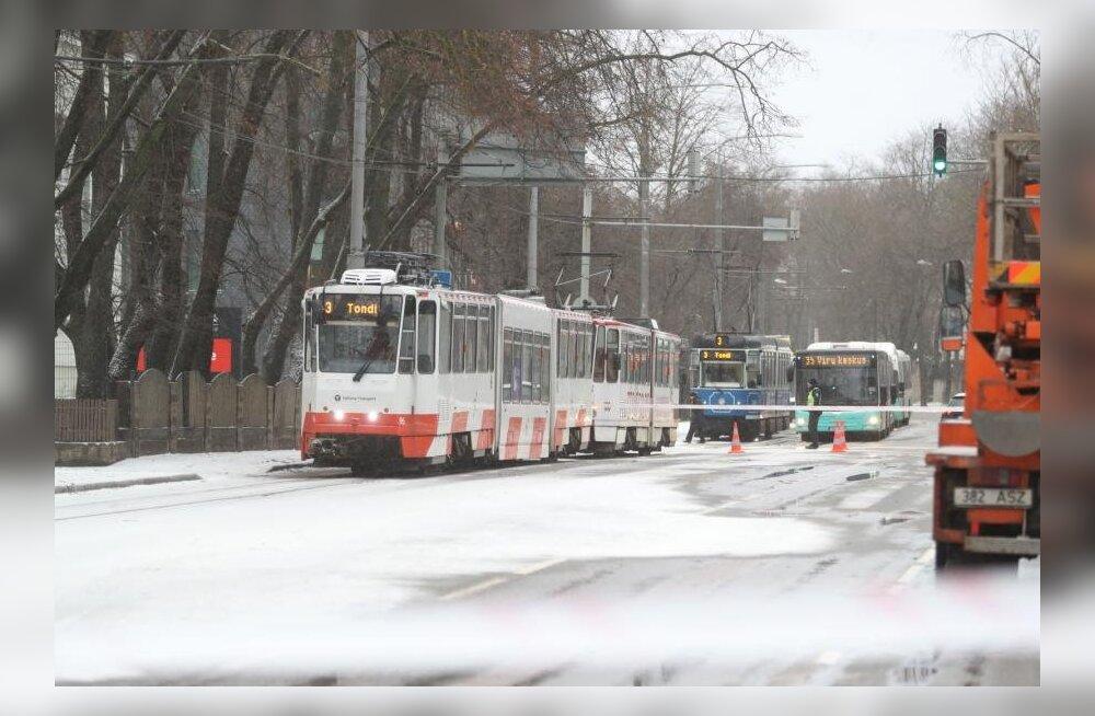 ФОТО: В Кадриорге упавшее на дорогу дерево сильно нарушило движение