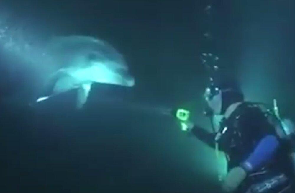 Hämmastav VIDEO | Hädas ja valudes olnud õnnetu delfiin ujus ise sukelduja juurde, et temalt abi paluda