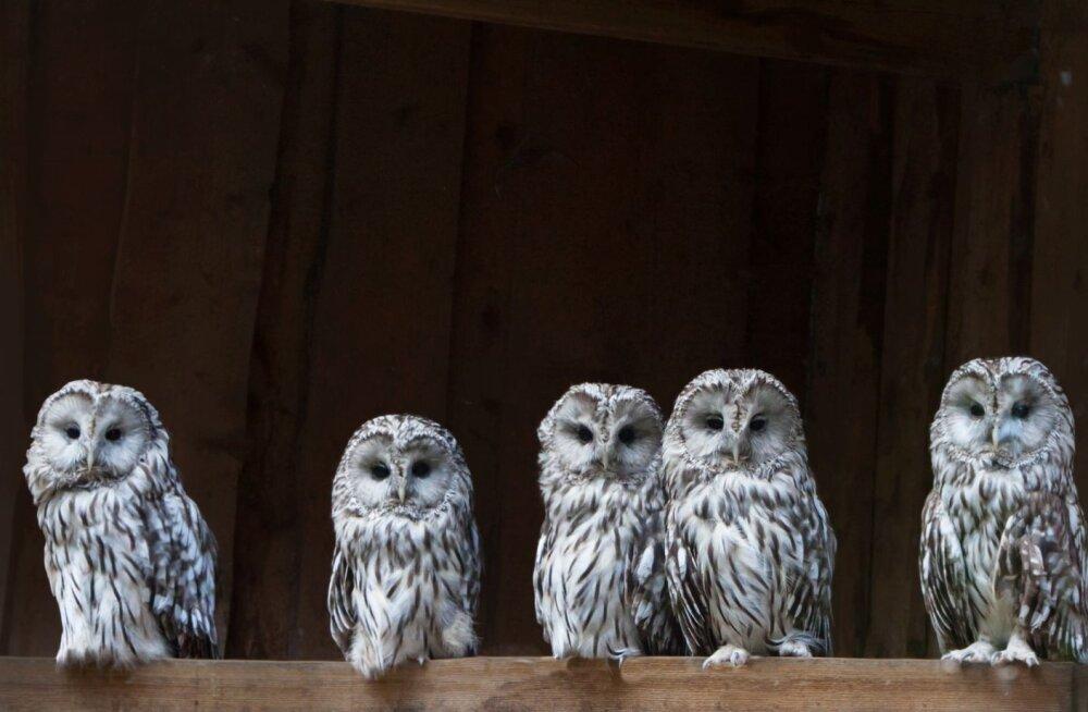 ÜRITUS | Tallinna loomaaed kutsub isadepäeval kakkudele külla