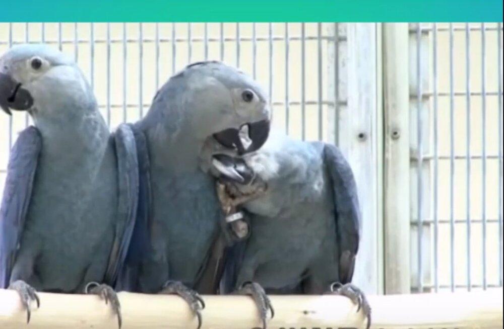 Pilguheit loomariiki: need on möödunud aastal väljasurnud või suures ohus olevad loomad