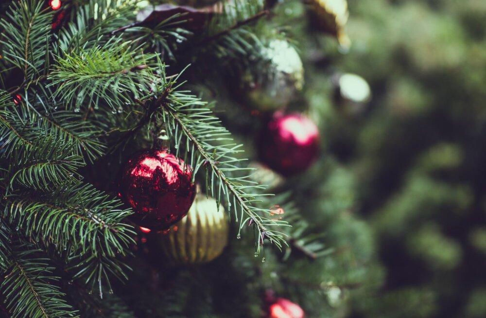 Рождественский тест | Проверьте свои знания: 10 вопросов из Библии