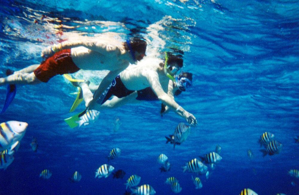 10 kõigi aegade parimat snorgeldamispiirkonda