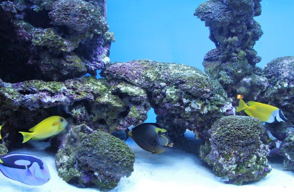 10 põhilist viga, mida akvaariumikalade omanikud tavaliselt teevad