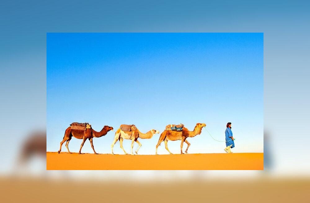 Reisidiilid.ee nädala reisisoovitused: Casablanca 202 €, Bangkok 399 €, Buenos Aires 466 €