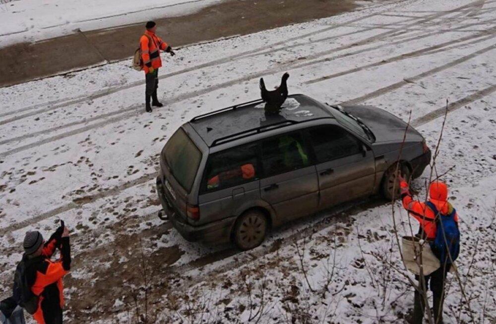 ФОТО: Сумасшедший глухарь взял в заложники автомобиль лесников