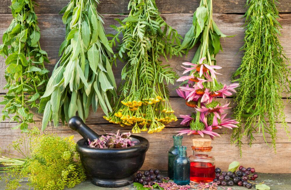 On aeg minna loodusesse ravimtaimevarusid täiendama: taimed, mida korjata augustis
