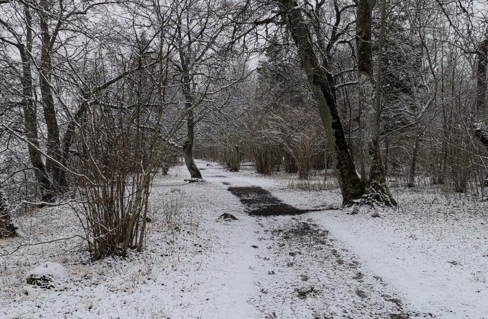 Polaaruurija: oleme Eestis viimase 50 aastaga talvest kaotanud kuu aega