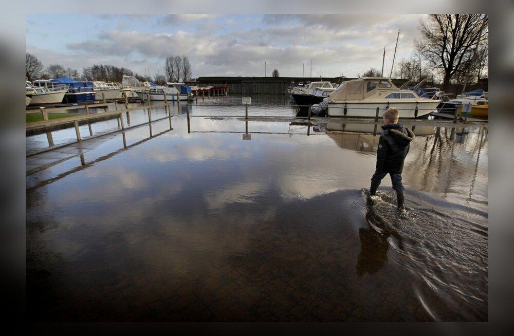 Hollandis evakueeriti purunemisohus tammi juurest sadakond inimest