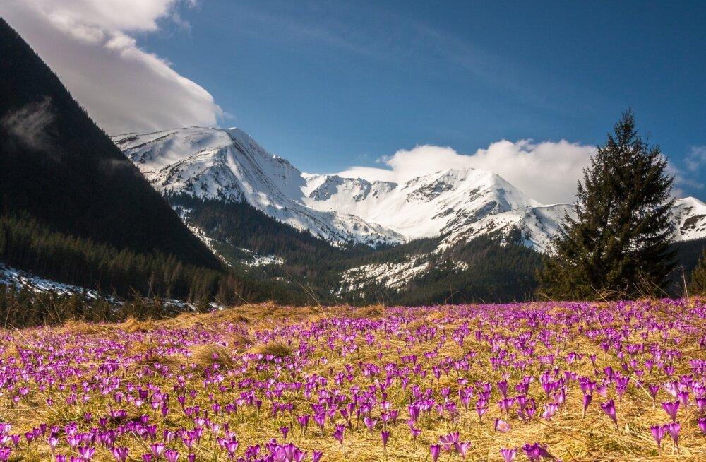 12 lummavat sihtkohta maailmas, kus õitsevad kevadeti kõige kaunimad lilleõied