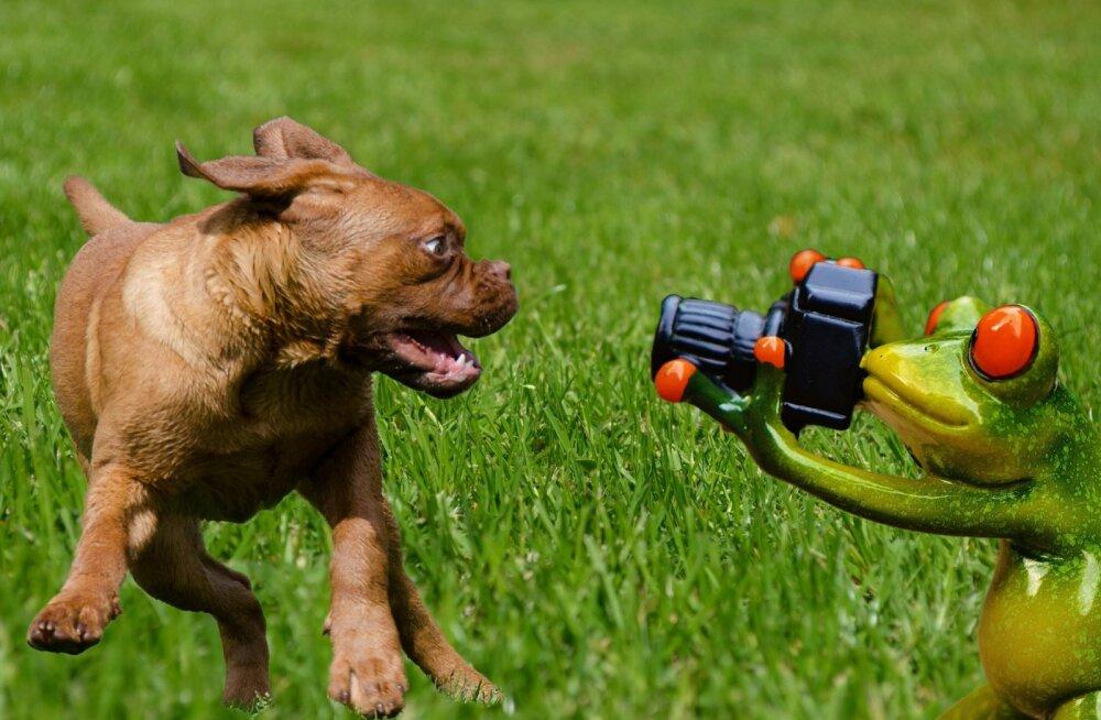 Armsad FOTOD: Need naeruväärselt ebafotogeenilised loomad näitavad end kaamera ees vaid parimast küljest