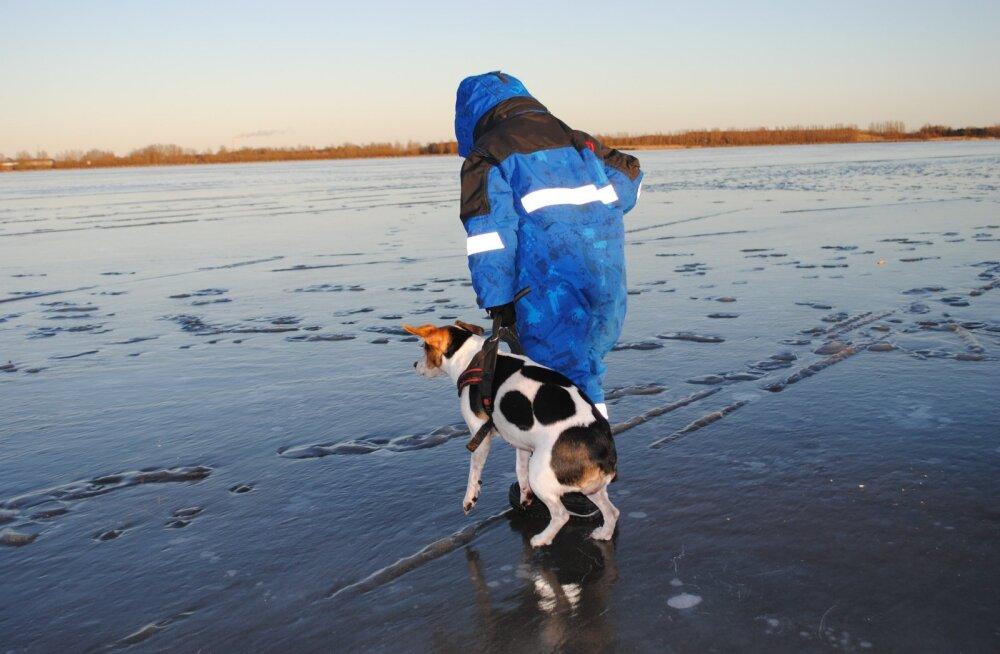 Ole ettevaatlik: Viljandimaal läbi tiigijää vajunud koer jõudis õnnelikult koju tagasi