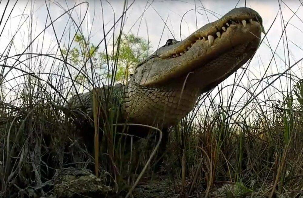 """Ungari režissööri Zoltán Töröki linateos """"Everglades – rohtunud jõgi"""" pälvis  tänavuse festivali peaauhinna."""