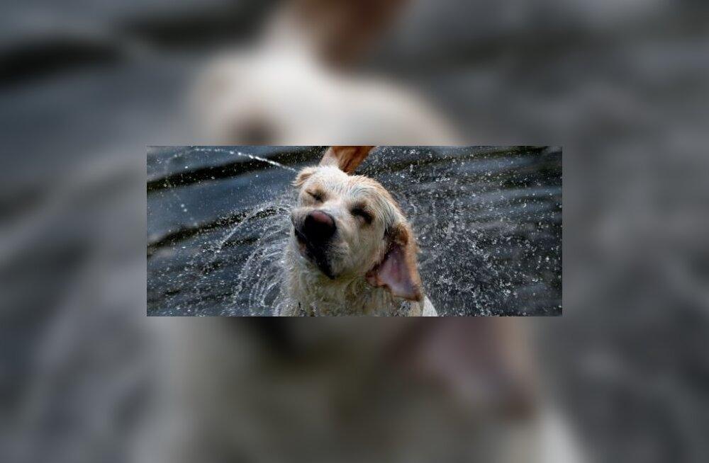 Peremees päästis ussilt hammustada saanud koera - imes mürgi koonust välja