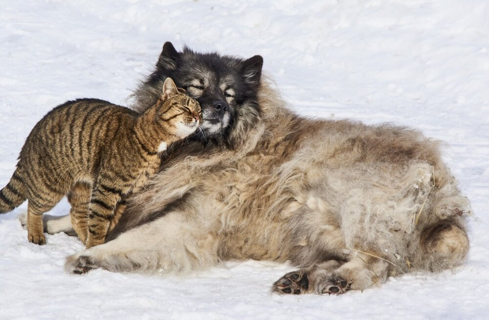 Eesti käitumispsühholoog selgitab: kas kassi ja koera omavaheline sõprus on võimalik?