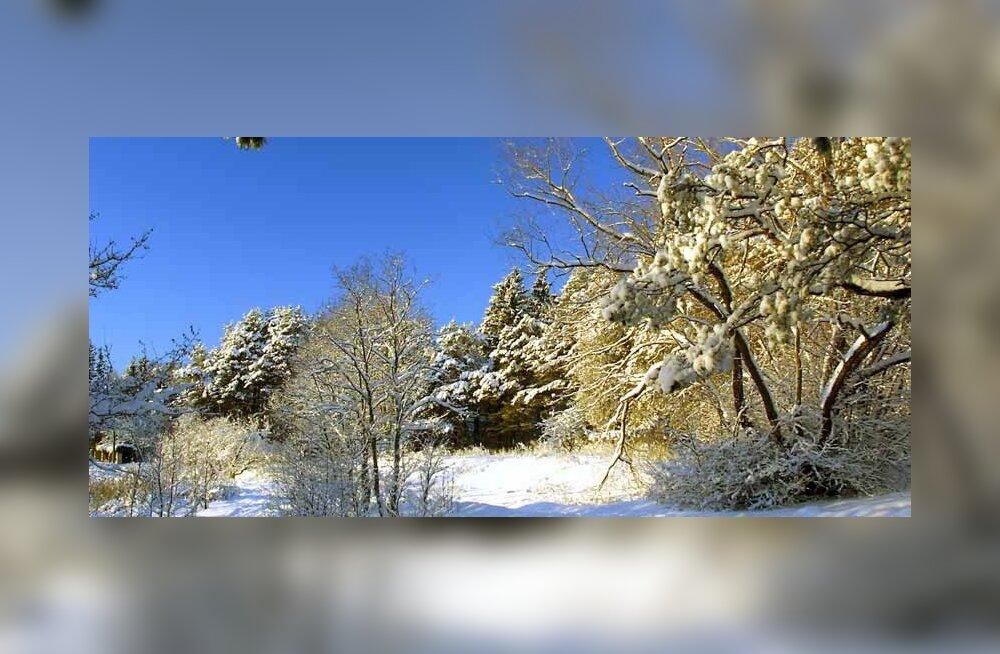 Pirital on ilus ka talvisel ajal, seda võib tõdeda igaüks, kes lund ei pelga ja võtab vaevaks väikse jalutuskäigu ette võtta (Foto: Tiit Mõtus)
