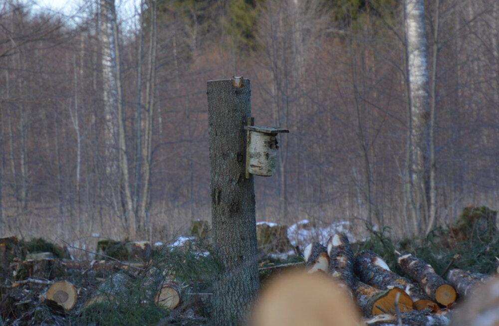 FOTO | Loodushoid RMK moodi: jätame keset lageraiet pesakastiga puu püsti, siis on linnud hoitud