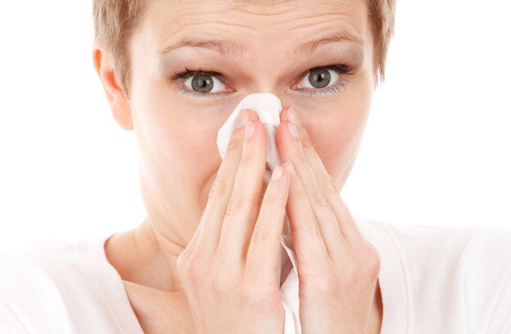 Tatise nina aeg on jälle käes? 9 tarkust, mida teha viirusnohu korral