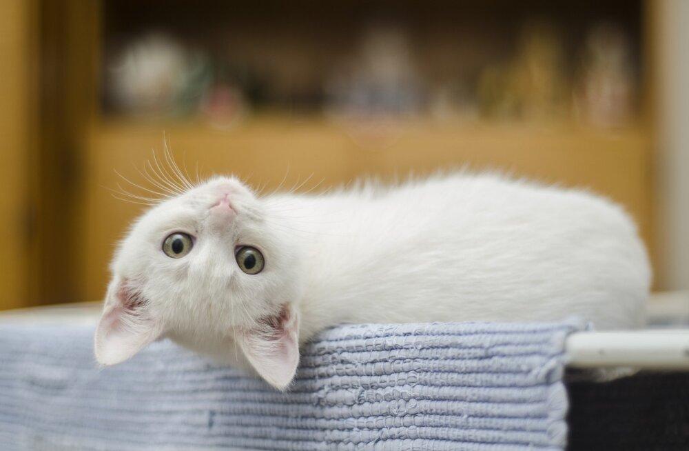 Värvikas KIISUBLOGI | Kass Ada mõte töötab vaid ühes suunas – mis koerustüki ma nüüd järgmiseks ette võtan
