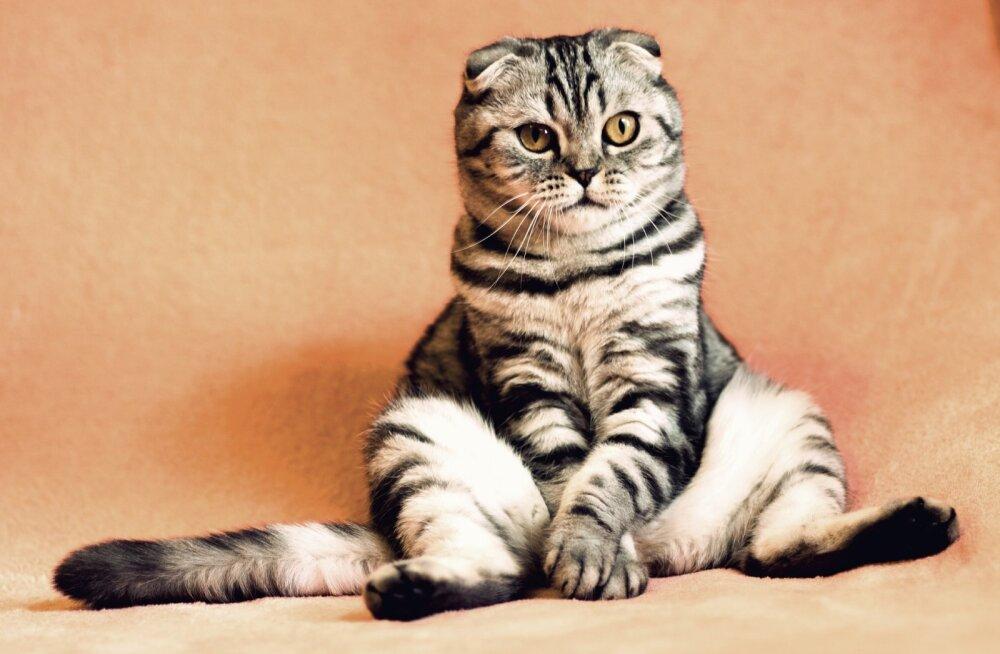 Võtad kassi? 5 levinumat viga, mida algaja kassiomanik peaks vältima