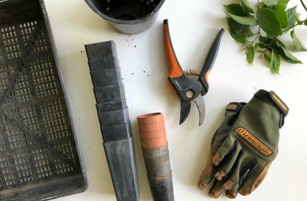 Ära unusta augusti tähtsaid aiatoimetusi! Need on asjad, mis nüüd kindlasti ära tuleks teha