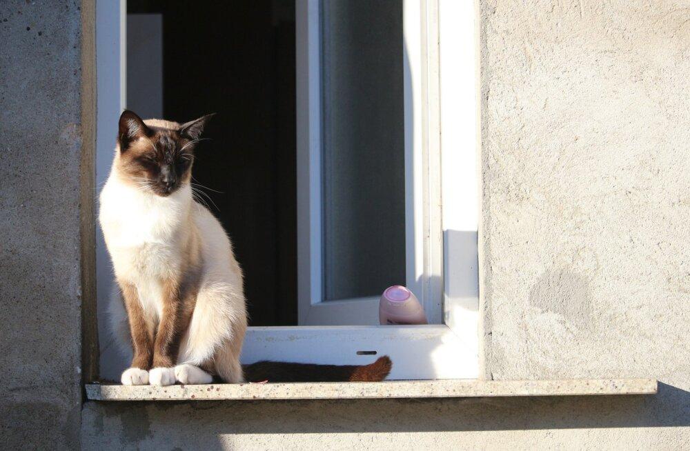 Kevad on käes: märka oma kassi aknalaual