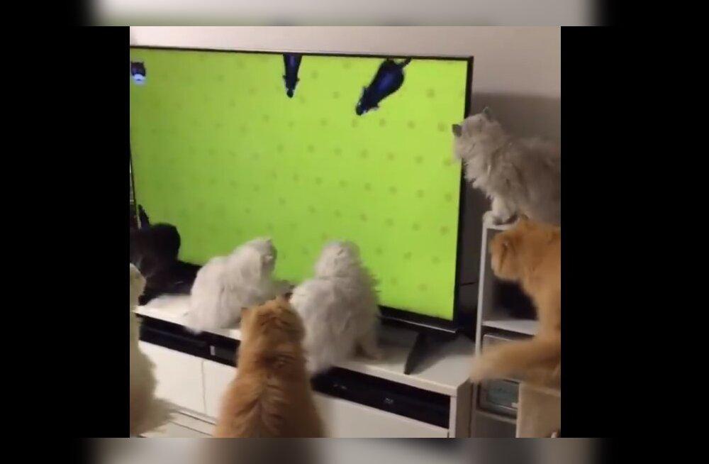 Humoorikas VIDEO | Tänapäeval leiab igaüks omale sobiva meelelahutuskanali!
