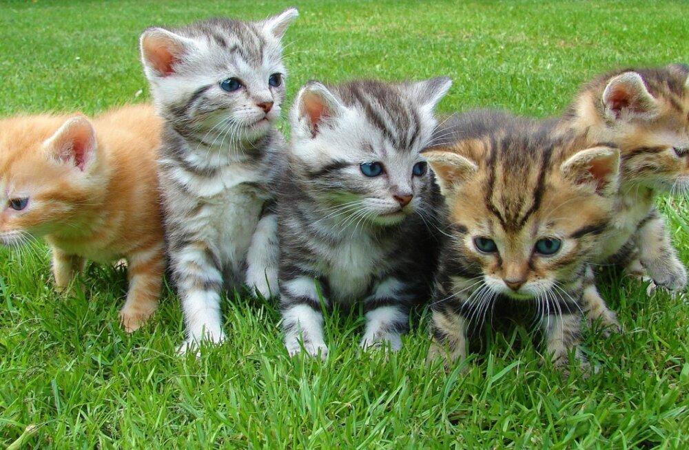 SUUR ABIPALVE   Ajutist hoiukodu vajavad kassipered, kes peavad seni varjupaigas puuris olema