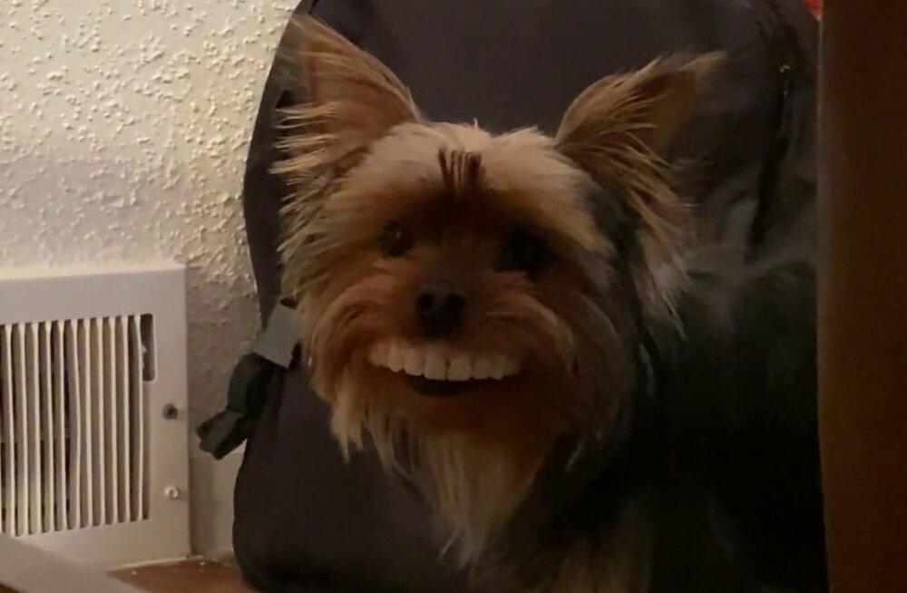 VIDEO | Koer pani peremehe proteesid pihta ja need sobivad talle kui valatult