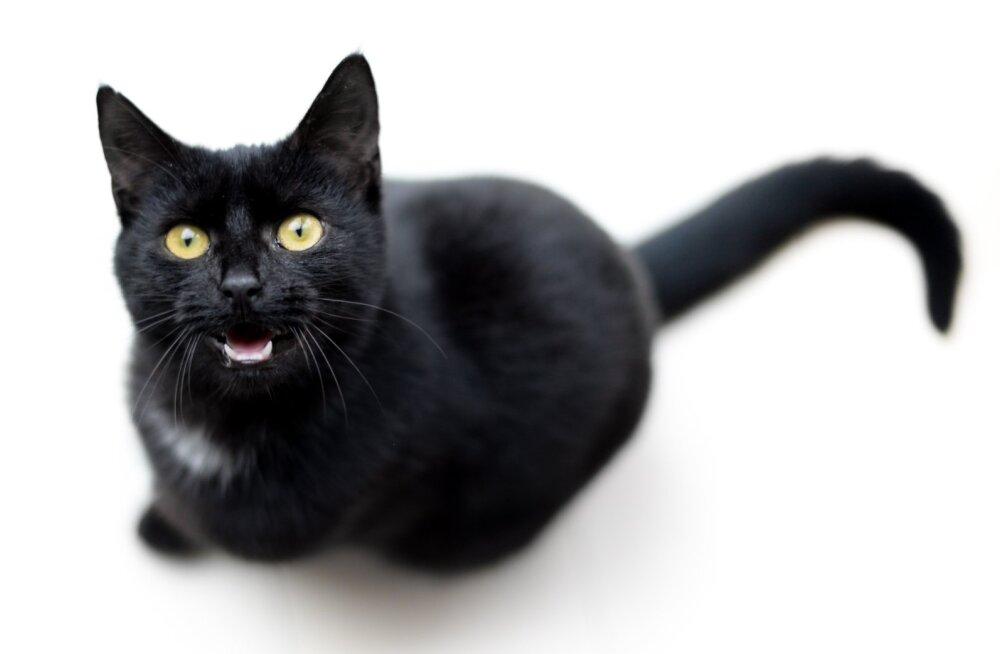 Kas tunned kasside suhtluskeelt? Seletus peamistele häälitsustele, mida kass teeb