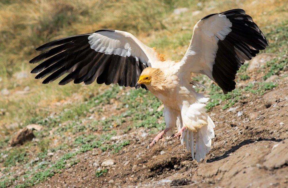 Prognoos – 100 aastaga kahaneb oluliselt lindude ja imetate ökoloogiline mitmekesisus