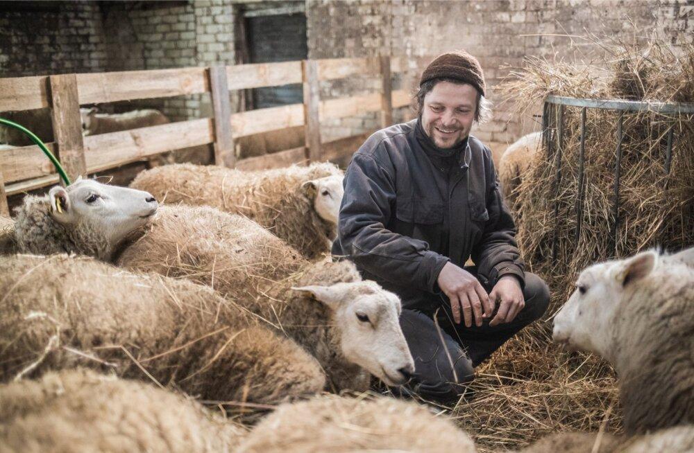 VTA võtab tähelepanu alla loomapidajad, kes lambaid enda tarbeks tapavad