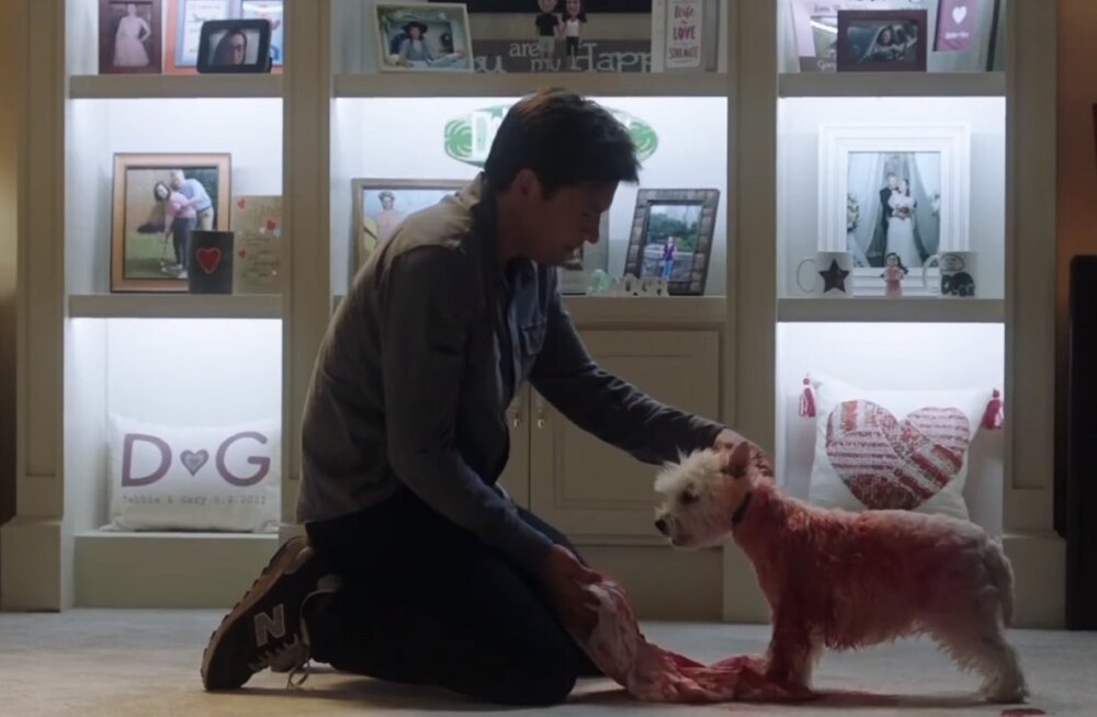 Kes teeb, see jõuab! Saa tuttavaks vahva koeraga, kes osales eelmisel aastal lausa kahes Hollywoodi filmis