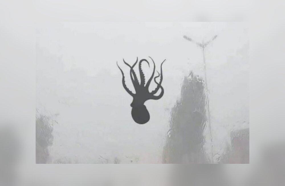 FOTOD   Torm Hiina moodi: taevast sadas kalmaare, meritähti ja krevette