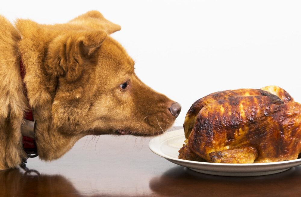 Jõulusöök koos lemmikloomaga – mida lubada, mida mitte