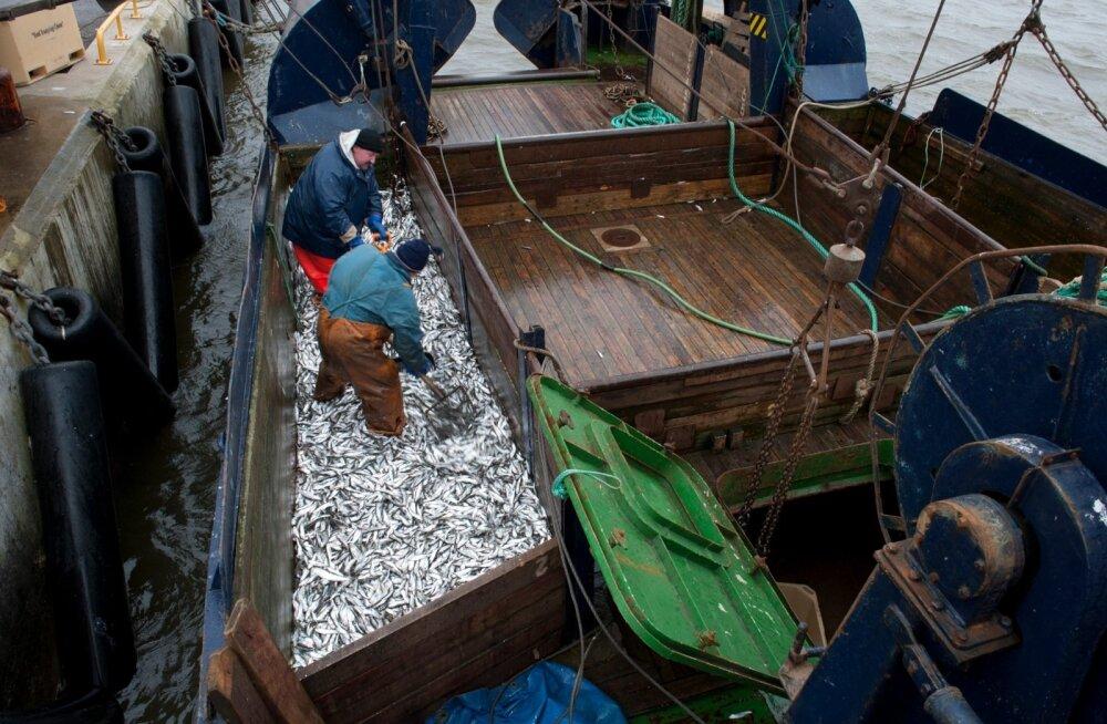 Kalurid, kalapüügitraalerid, räim