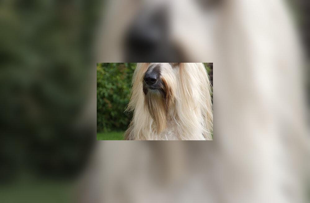 Kui Gandalf oleks koer