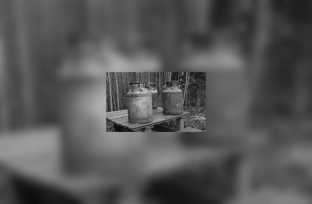 Kriminaalne lugu Kisuvere kolhoosis: kes riisus piimalt koore?