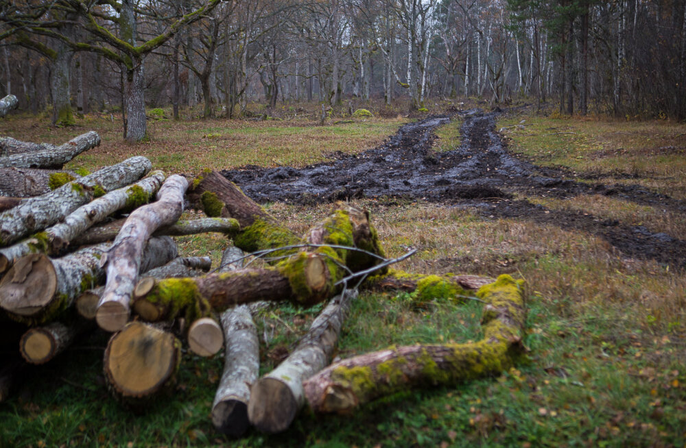 MEIE MAA   Keskkonnaamet süüdistab RMK-d pinnase kahjustamises