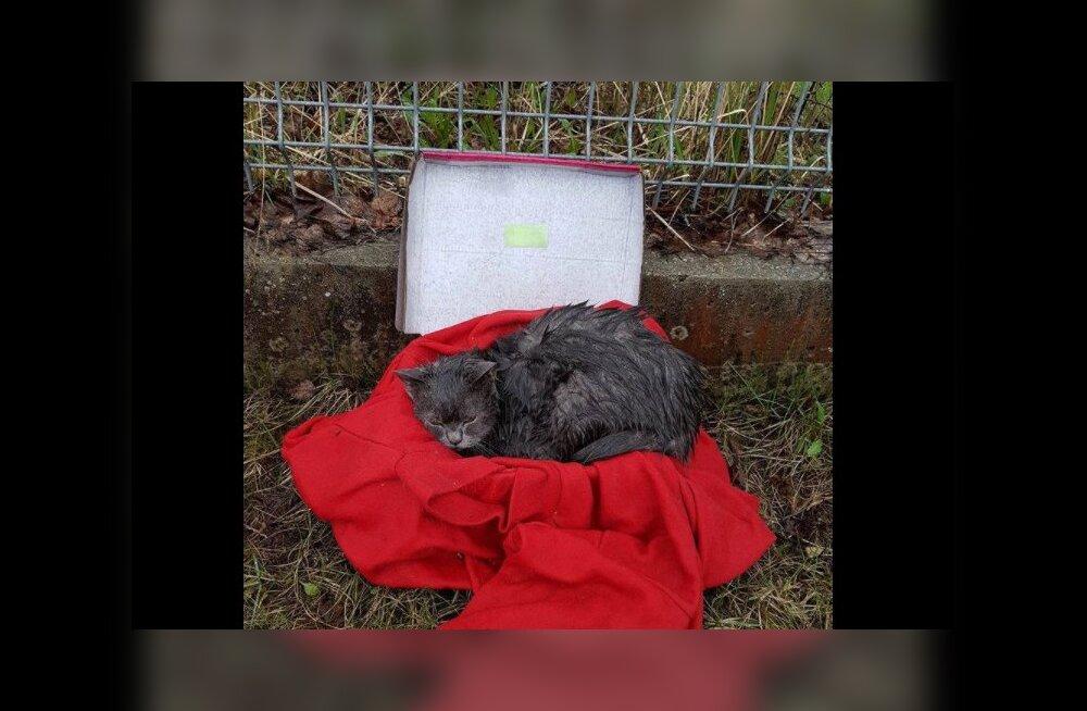 FOTOD | Inimene jättis õnnetu kassi hoiupaiga värava taha vihma kätte