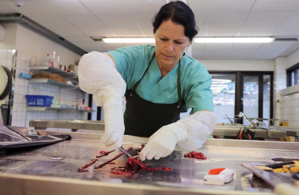 Norras surevad koerad salapärasesse haigusesse